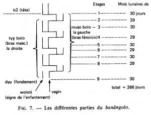 Banangolo1